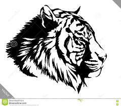 tiger black and white drawing. Delighful White Download Black And White Ink Draw Tiger Vector Illustration Stock   Of Background In Drawing E