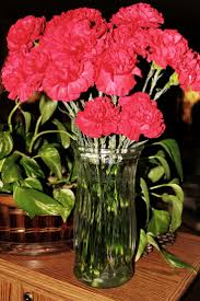 carnations my favorite flowers