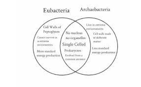 Bacteria And Viruses Venn Diagram Archaea Vs Bacteria Venn Diagram Cell Wall Microbiology
