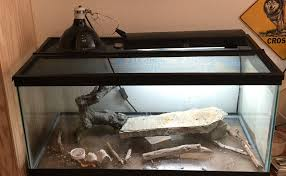 40 gallon breeder for bearded dragons