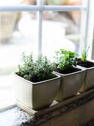 indoor gardening supplies. Full Size Of Organic Gardening:grow Tent Indoor Grow Kits For Vegetables Lawn Fertilizer Gardening Supplies