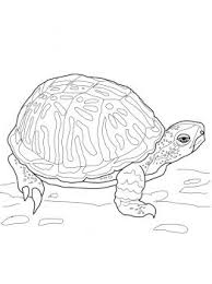 Small Picture 451 best Animal Colouring Pages images on Pinterest Free