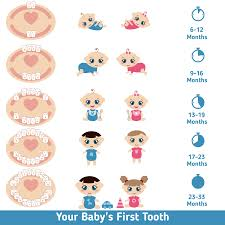Teething Chart Babies Baby Teething Signs Symptoms Remedies And Faqs St Johns