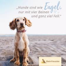 Zitat Hundeliebe 20 Schöne Sprüche über Hunde 2019 05 16