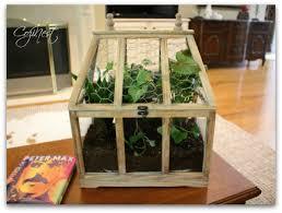Cat-proof houseplants