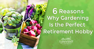 6 reasons why gardening is the perfect retirement hobby png