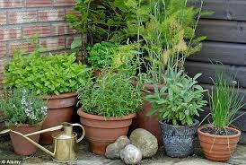 organised large pots are often used to move elished garden plants while specimen