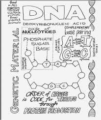 132a7a2763e3b6b2389957e633208ce7 biology teacher biology classroom 485 best images about genetics on pinterest bill nye, videos and dna on mendelian genetics worksheet