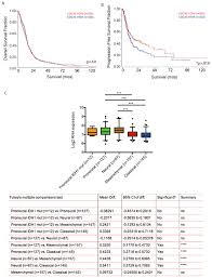Oncotarget | A role for activated Cdc42 in glioblastoma multiforme ...