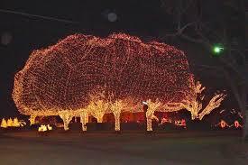 tree lighting ideas. Image Via Car Angel. Tree Lighting Ideas