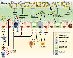 maintenance of intestinal homeostasis