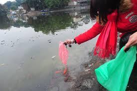 Kết quả hình ảnh cho thả cá chép vàng