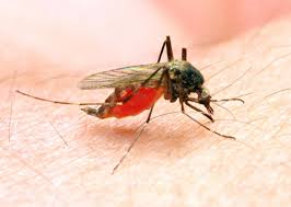 malaria symptoms treatment and prevention malaria is passed on by the anopheles mosquito