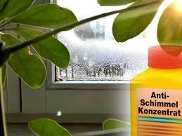 Schimmel So Gefährlich Sind Schwitzende Fenster Tag24