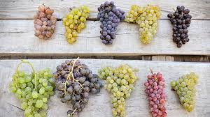 Washington State Seasonal Fruit Chart Grape Season The Different Types Of Grapes And How To Buy