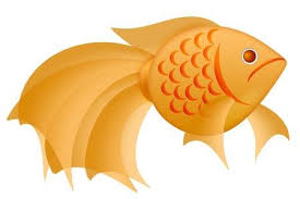 gold fish clip art. Brilliant Clip Fancy Goldfish Clipart Illustration Isolated On White Background Stock   11585715 To Gold Fish Clip Art U