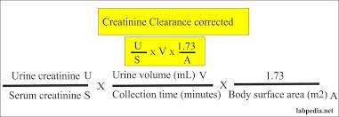 creatinine clearance crc glomerular