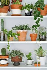 terracotta plant pots houseplants indoor