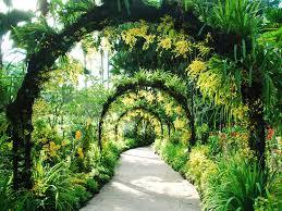 singapore botanic gardens singapore singapore park garden review condé nast traveler