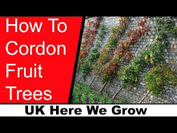Best 25 Pruning Fruit Trees Ideas On Pinterest  Prune Fruit Growing Cordon Fruit Trees