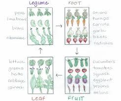 Green Bean Growth Chart Crop Rotation Made Easy Bonnie Plants