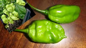green chili pepper types. Plain Pepper Amazing Kinds Of Green Chili  Types And Pepper I