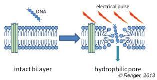 Bioelectrochemical Society