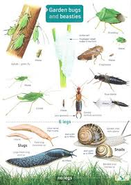 Invertebrate Identification Chart Garden Bugs And Beasties Identification Chart By Farley