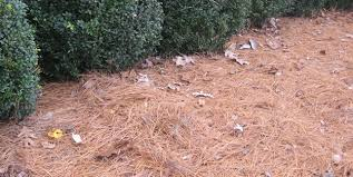 garden mulch. Contemporary Garden Pine Needle Mulch Garden Design Calimesa CA For