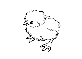 Small Picture Baby Chick Coloring Pages Baby Chick Outline Coloring Page Kids