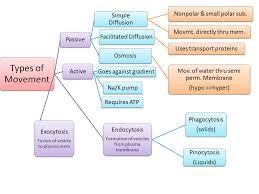 osmosis essay middle school popularity essay ib biology ia osmosis  ib biology ia osmosis scribd ib biology lab osmosis essays studymode