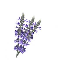 Image result for flowers , white background