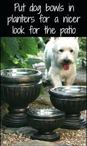heated pet water bowl best dog water bowls ideas on cat water bowl put dog bowls heated pet water bowl