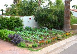 Small Picture Vegetable Gardens in Unexpected Places Ramblings from a Desert