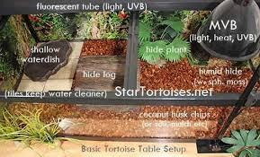 Indian Star Tortoise Diet Chart Tortoise Enclosures For Winter Indoor Housing For Star