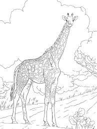 Giraffe Coloring Pages Coloringsuite Ruva
