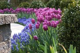how to plan a spring bulb garden