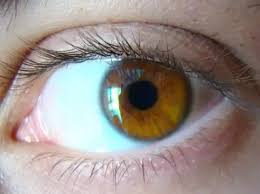 Do I have hazel or amber eyes? They look green under sunlight ...