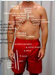 Chapmans Reflexes Google Search Massage Quotes Massage