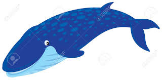 blue whale stock vector 13273795