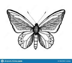 черно белая иллюстрация вектора бабочки эскиз насекомого руки