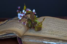 book read flower old reading color flowers art books culture old books i am a
