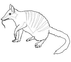 Small Picture Australian Numbat coloring page Free Printable Coloring Pages