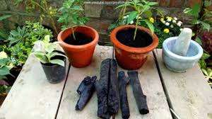 charcoal natural fertilizer and soil conditioner garden idea