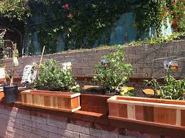 Small Picture Modren Garden Raised Beds For Choosing The Best Wood O On Design