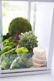 This easy to make terrarium will add a splash of vibrant green to your home  and