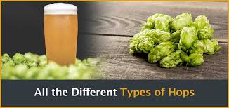 Hops Types Chart The 52brews Guide Hop Varieties And How To Use Hops In Brewing