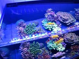 full image for reef tank lighting reviews aquarium kits steps follow successful diy led light kit