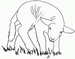 Small Picture Sheep coloring page Animals Town animals color sheet Sheep