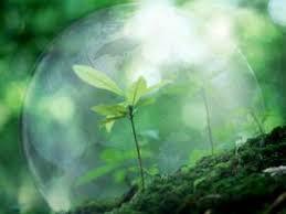 Всемирный день охраны окружающей среды новости экологии на ecoportal Всемирный день охраны окружающей среды